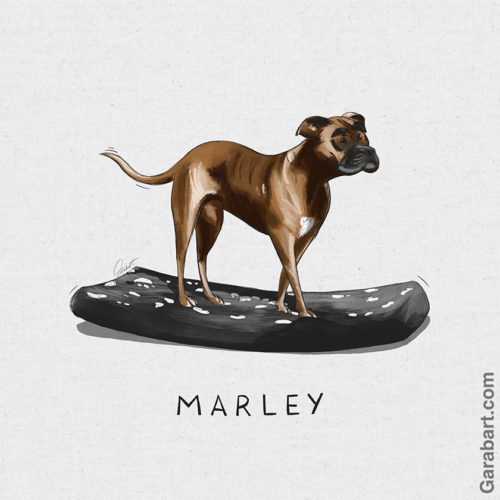 Marley_Illustration_Garabart